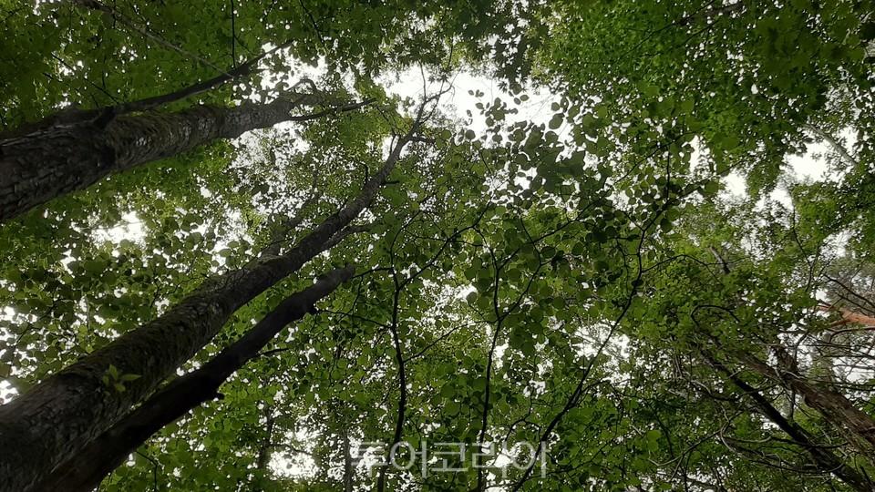하늘이 보이지 않을 정도로 나무가 우거진 어사길